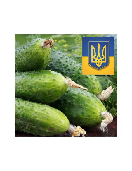 Украинские огурцы