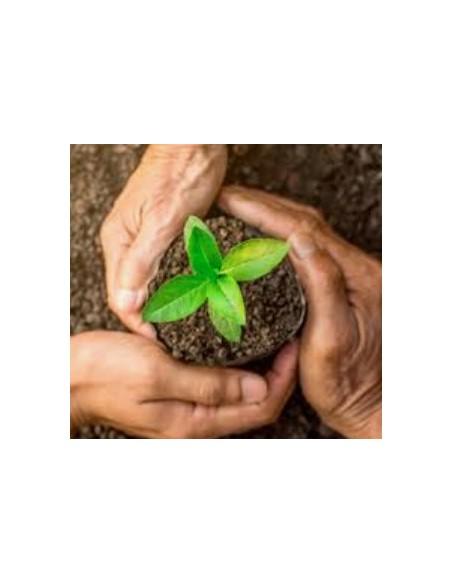 Засоби захисту і лікування рослин