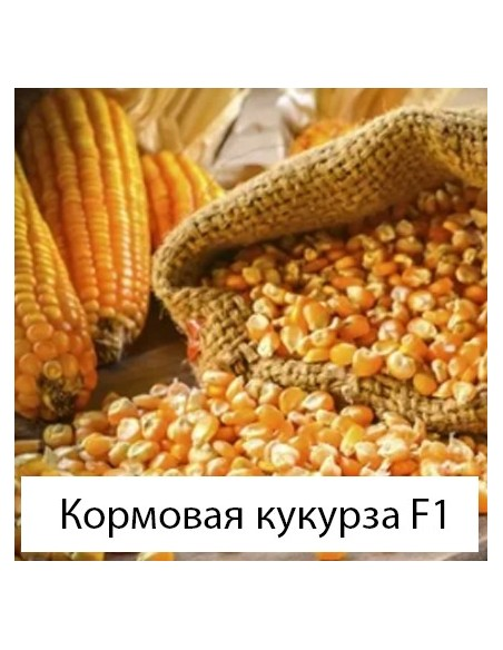 Кормова кукурудза