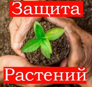 Средства защиты для растений
